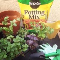 My urban jungle, a container herb garden